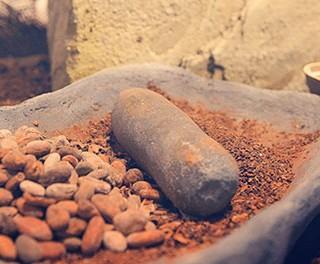 New Chocolate Museum in Belgium