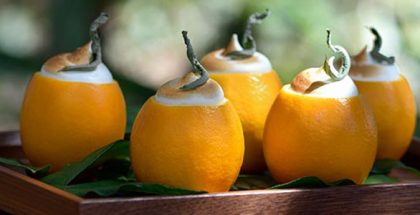 lemon verbena by Koto