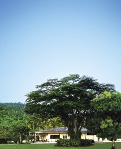 Tree in GranjaLuker