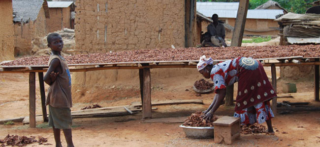 More children in African cocoa production, albeit with greater access to education