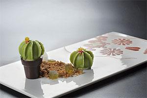 Cactus by Eric Ortuño