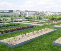 Vegetable garden Le Cordon Bleu Paris