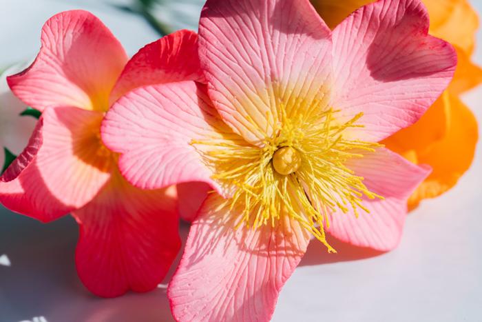 Detail of a sugar flower