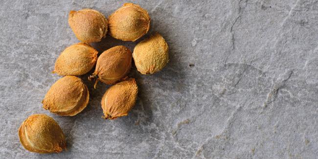 Apricots pits