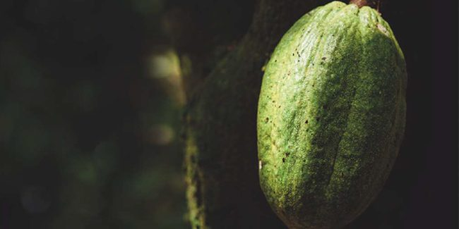 Cacao Barry announces the sustainability of its chocolates