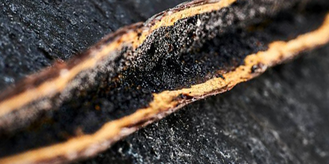 Norohy, Valrhona's first organic vanilla bean, arrives in the USA