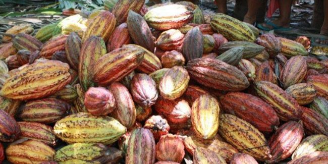 Francisco Migoya, the USA Cacao Barry ambassador most committed to sustainability