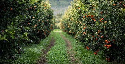 Ponthier Clementine Corse, photo by Sylvie Lezier