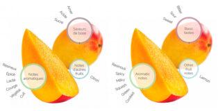 Mango fruitology analysis